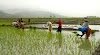 Download: Kerala Paddy Field Wetland Protection Rules; Form 5, 6, 7, 8, 9, 10
