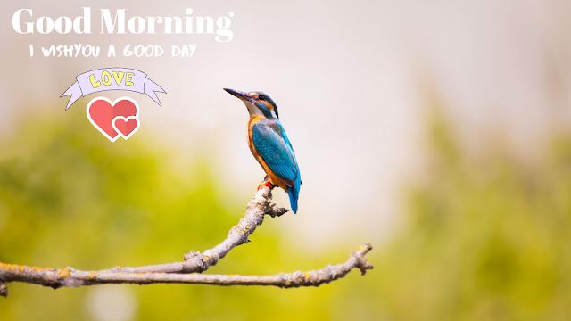 nice bird kingfisher  good morning images