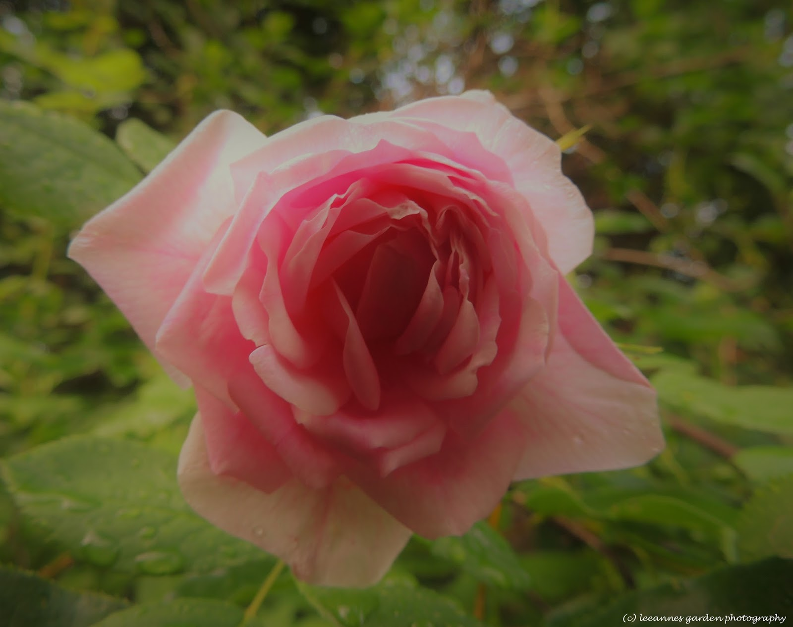 leeannes garden