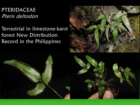 Pteridophytes: World of Ferns and Lycophytes   New Species Discovered in the Philippines