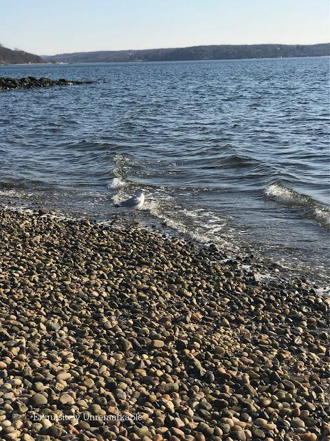 Seagull On A Rocky Beach