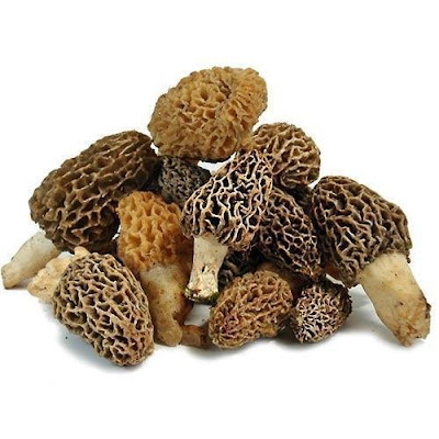 Gucchi mushroom supply