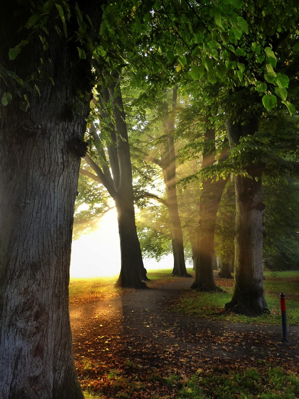 Hirschpark nebel