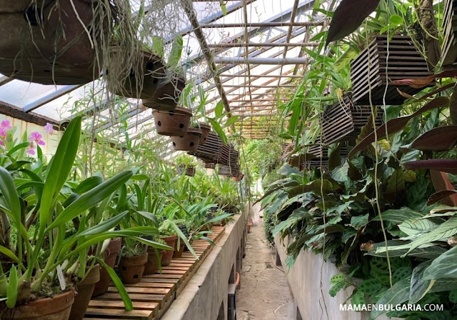 invernadero Jardín Botánico Sofía Bulgaria