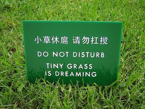 Funny Cute Signs tiny grass