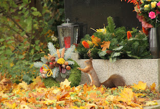 Nature in the cemeteries