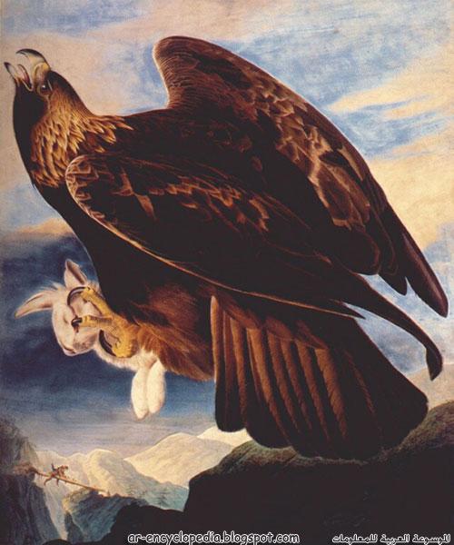 Audubon252C John James Golden Eagle