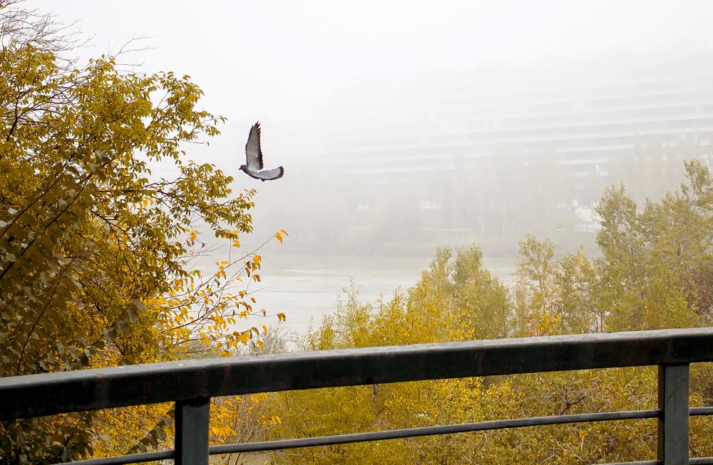 fotografía zaragoza otoño