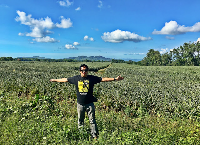 Del Monte Pineapple Plantation in Manolo Fortich Bukidnon