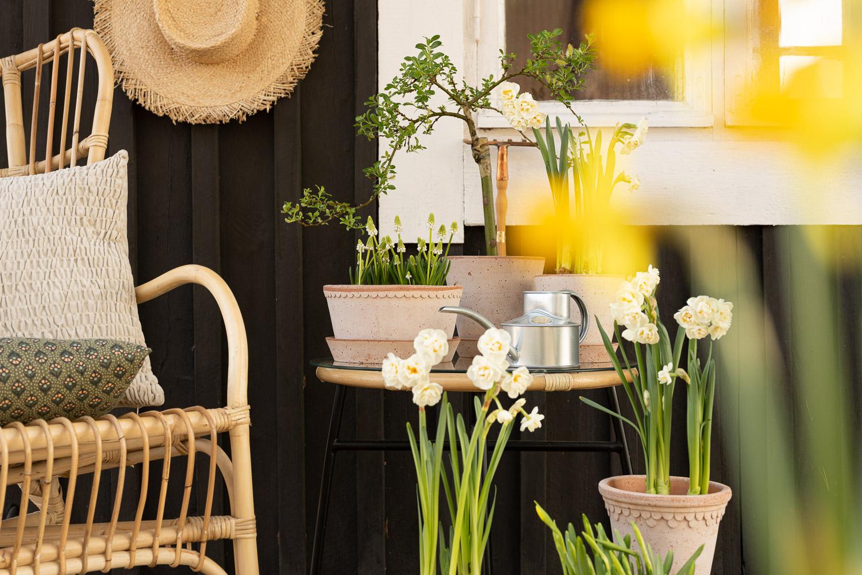 patio, kevät, bergs potter ruukut
