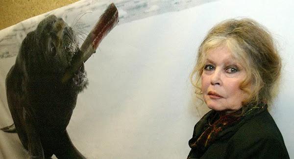 Brigitte Bardot interpelle Éric Dupond-Moretti pour sauver le chien Curtis «condamné à mort»