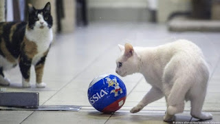 Achilles، the deaf cat predicting this year's World Cup results