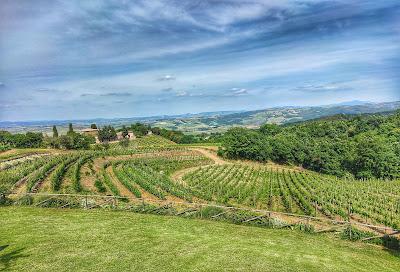 Cru vigne montalcino tassi franci