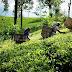 1000 ரூபா சம்பளம் தொடர்பில் பெருந்தோட்ட நிறுவனங்கள் முன்வைத்த  கோரிக்கை நிராகரிப்பு