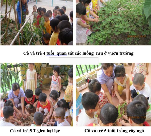 Xây dựng môi trường xanh sạch đẹp ở trường mầm non