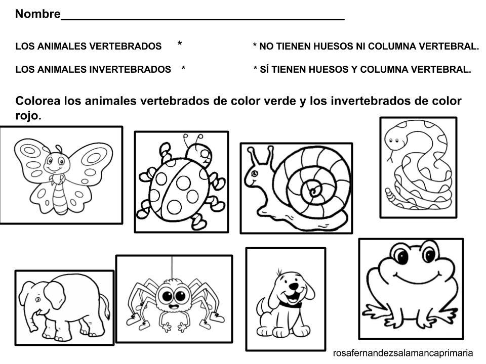 La clase de Marta: TIPOS DE ANIMALES