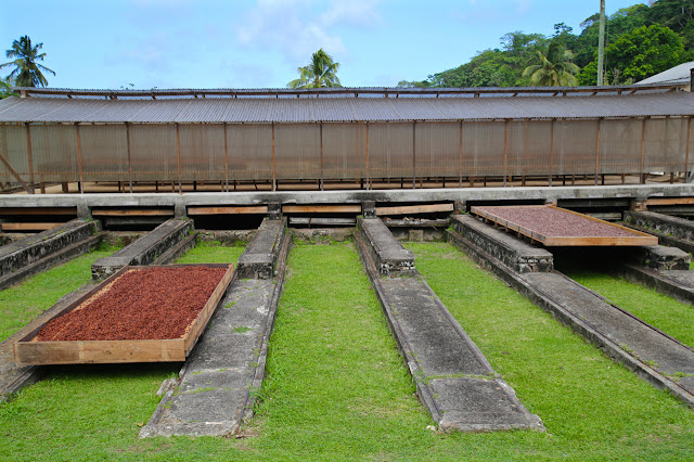 cacao beans drying at Belmont Estate, Grenada