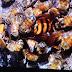 Bal Arıları Yaban Arısına Hücum Ettiği An