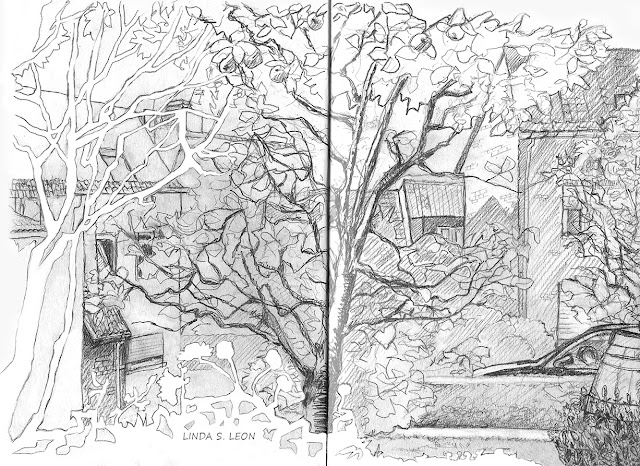 Wander through the arms of the Cydonia in my frontyard - Graphite sketch by Linda S. Leon on https://tussendelijntjes.blogspot.com/