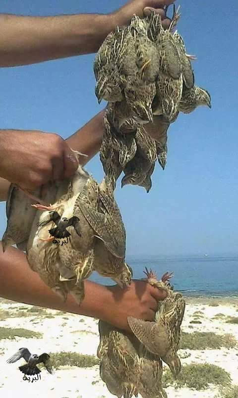 طرق الصيد بالشبكة,الصيد بالشبكة الهوائية,الصيد بالشبكة,الصيد بالشباك
