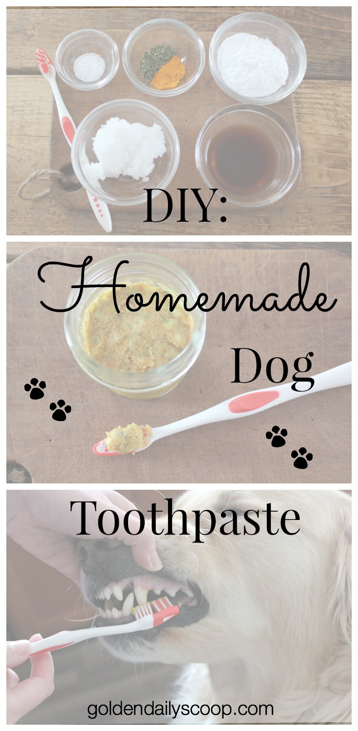 Golden Daily Scoop Diy Homemade Dog Toothpaste