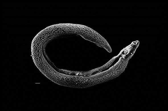 parasite-طفيلي