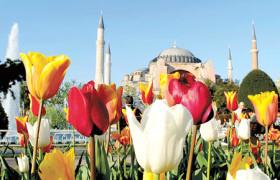 bunga-tulip-paket-umroh-plus-turki
