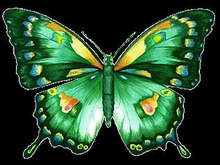 Rama Merupakan Antara Serangga Yang Mempunyai Kitaran Hidup Lengkap Sebagai Seekor