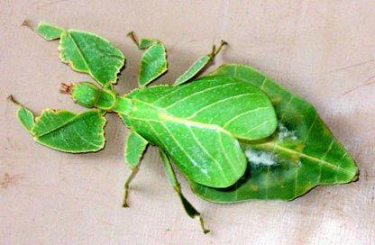 42++ Gambar hewan insecta terbaru