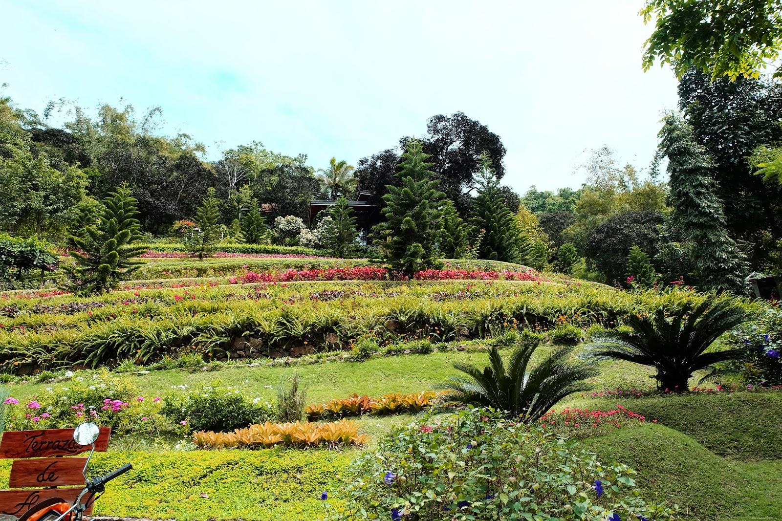 Life Saver Cebu Terrazas De Flores