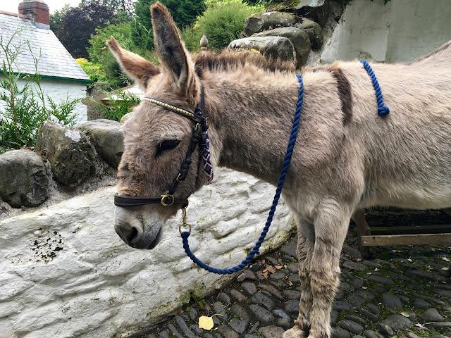 A Clovelly Donkey