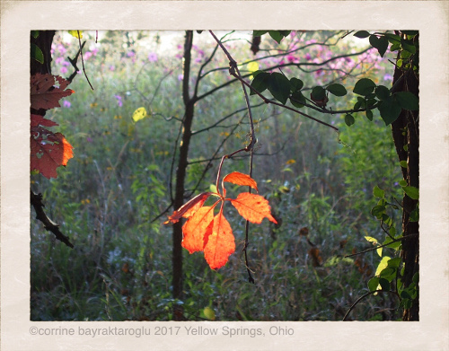 Photography in Yellow Springs Ohio