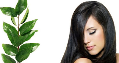 Follow This Simple Method To Use Curry Leaves For Faster Hair Growth