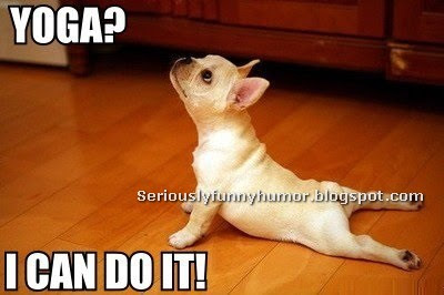 Yoga Dog - I can do it! Funny dog doing Yoga! Joke Meme