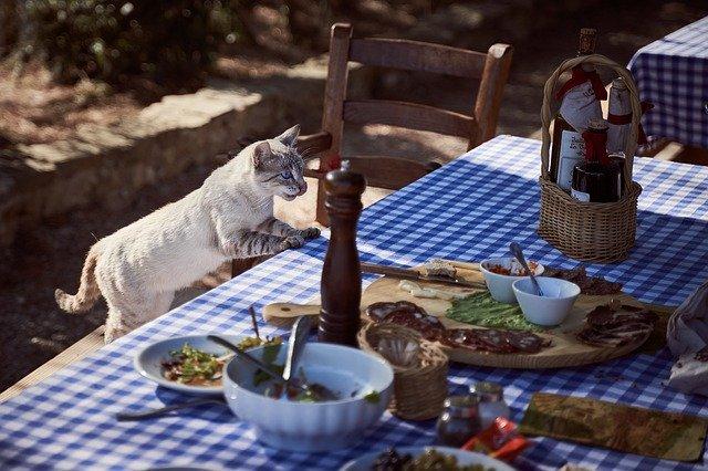 Starting Pet Restaurant Business