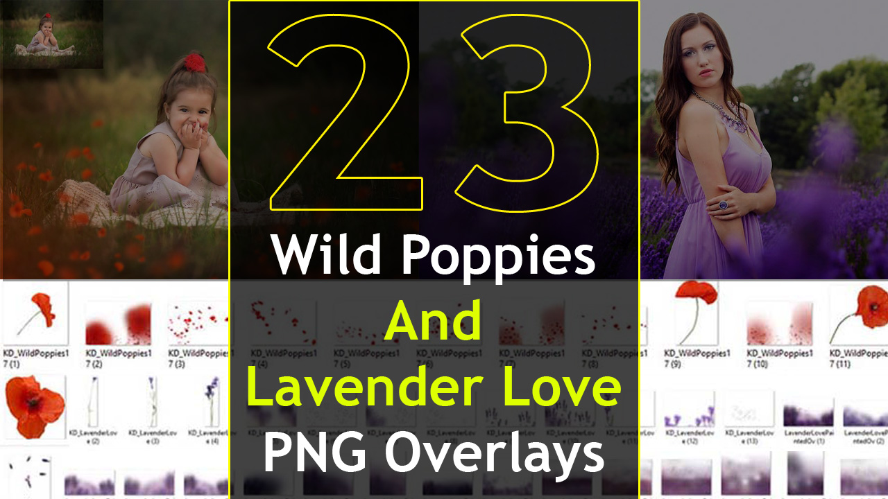 23 Wild Poppies And Lavender Love PNG Overlays