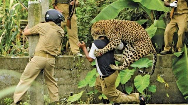 Most Dangerous Animals of India