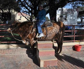 woman riding longhorn steer