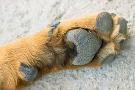 almofadas das patas dos cães