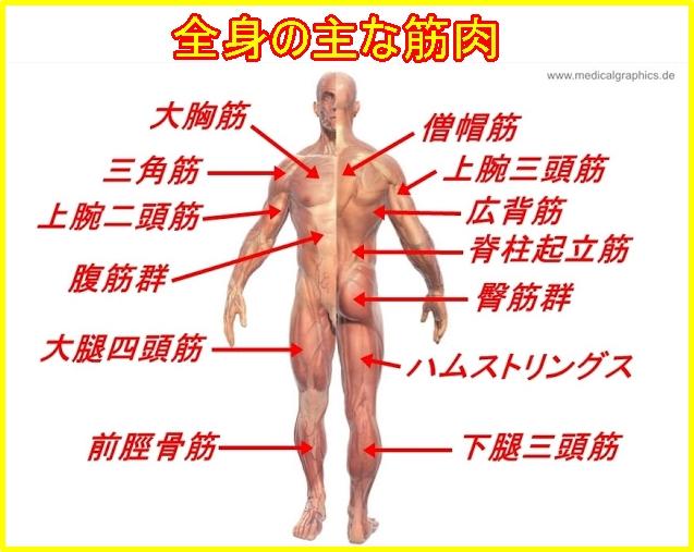 腕相撲で使う筋肉・必要な部位 アームレスリングのための鍛え方