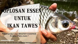 Oplosan Essen Untuk Ikan Tawes