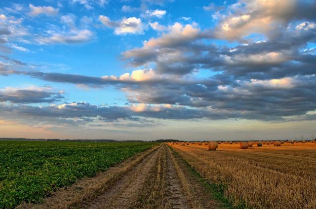Que se cache-t-il derrière l'agriculture biologique ?
