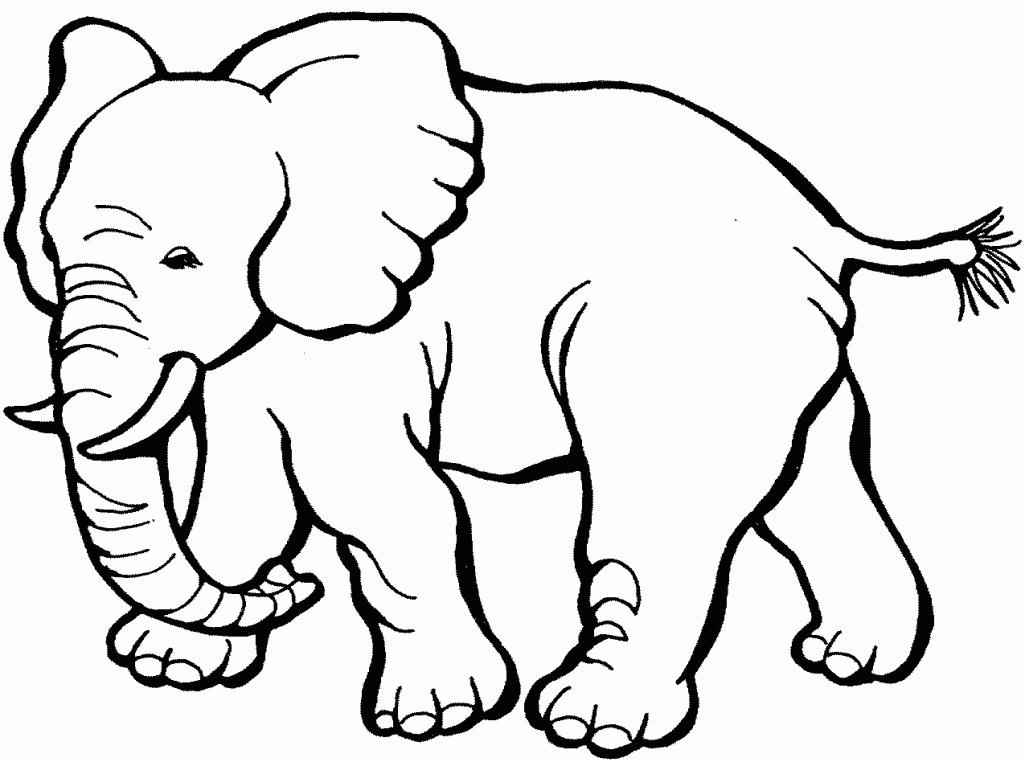 540 Gambar Hewan Untuk Diwarnai Anak Paud Terbaru