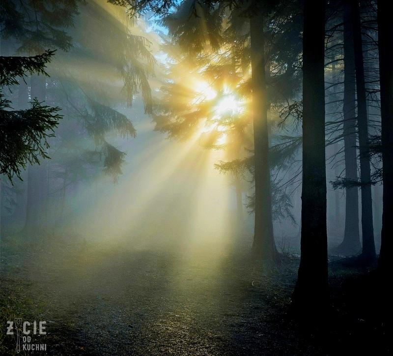 las, las we mgle, las o swicie, prawdziwki, grzybobranie, grzyby, grzyby lesne, przepisy z grzybami, jak zbierac grzyby, jak suszyc grzyby, jak mrozic grzyby, zycie od kuchni