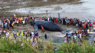 Baleia morre em Salvador