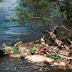 ZPP Meio Ambiente - Poluição dos Rios
