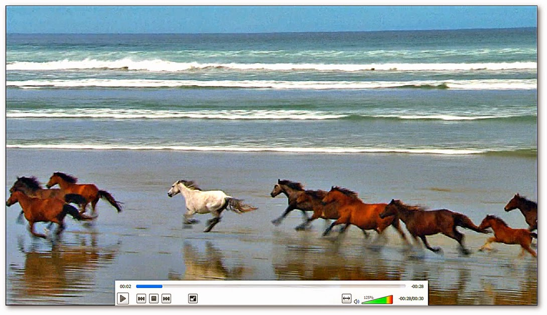 Caballos cabalgando en una playa Horses riding on a beach