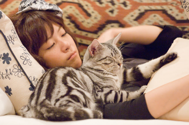 film tentang kucing