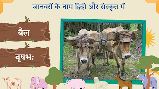 Bull name in sanskrit and hindi with images