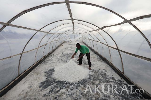 Pemerintah Cari Solusi Strategi Pemasaran Garam Rakyat